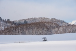 Hokkaido05